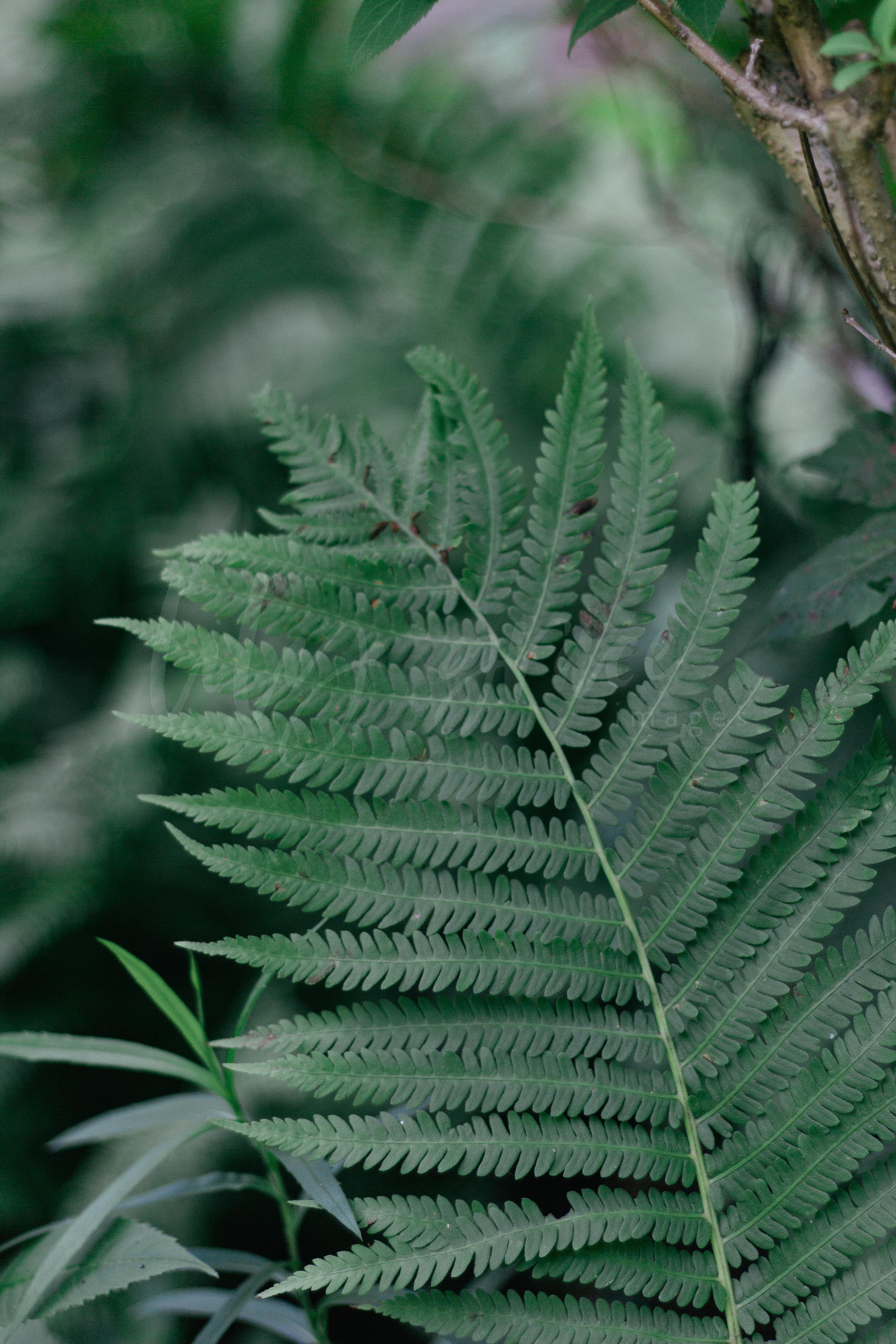 barrie stock photography, barrie, stock photos, photos for instagram, real photos, lilygrace images, toronto stock photography, greenery, photography, fern, green, garden photography, garden