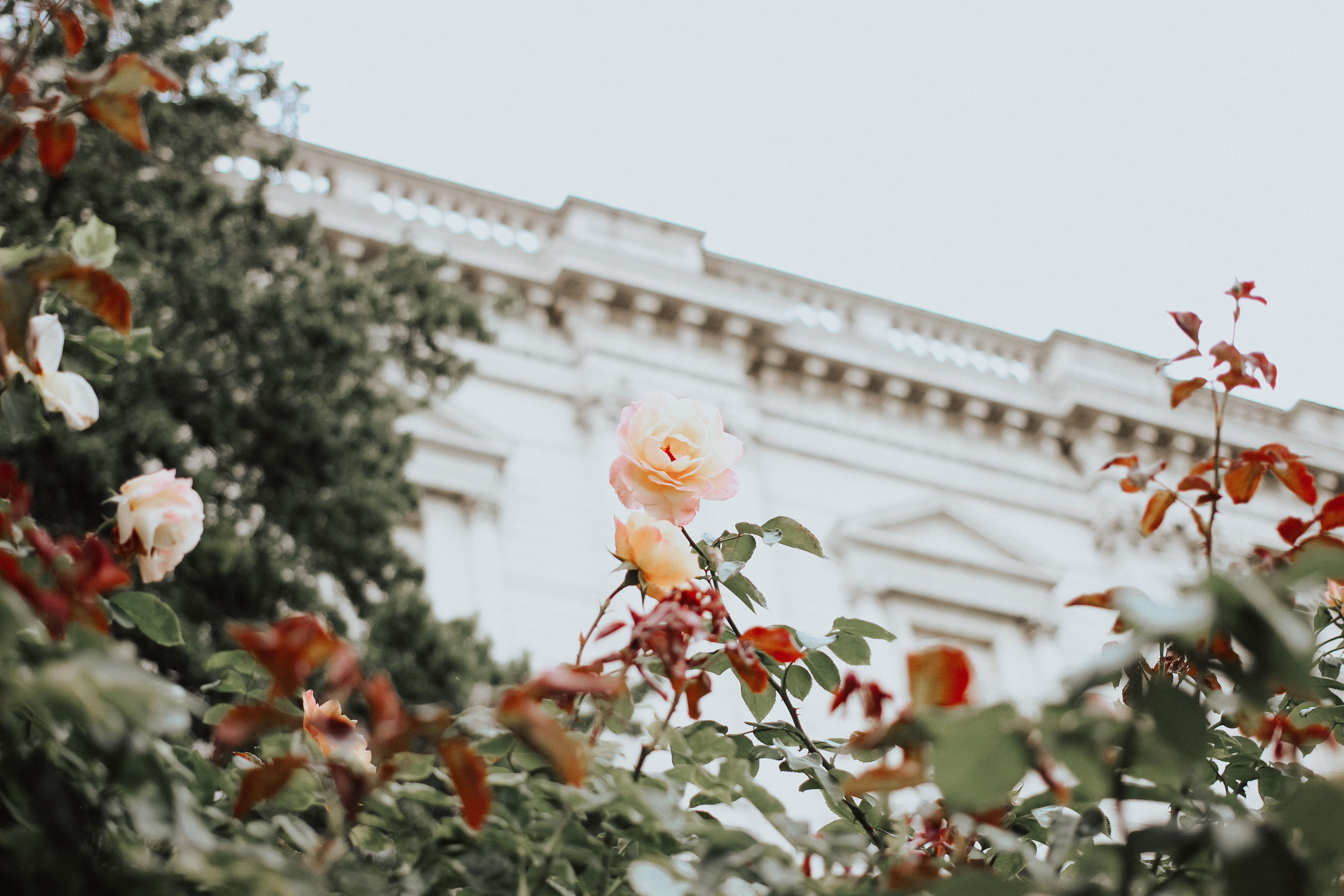 The Social Project, How To Make Friends, Social, Social Blogger, Social Media, Girl Boss, Entrepreneur, Creative, Collaboration, Barrie Wedding Planner, Barrie Social Media, Make Friends Club, London England, Travel, Travel Photography, St Pauls Catherdral